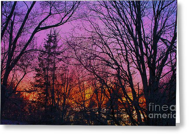 Ragged Peaks Greeting Cards - Sunset in the woods-HDR Greeting Card by Claudia Mottram