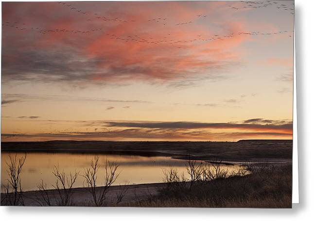 Wildlife Refuge. Greeting Cards - Sunset in West Texas Greeting Card by Melany Sarafis