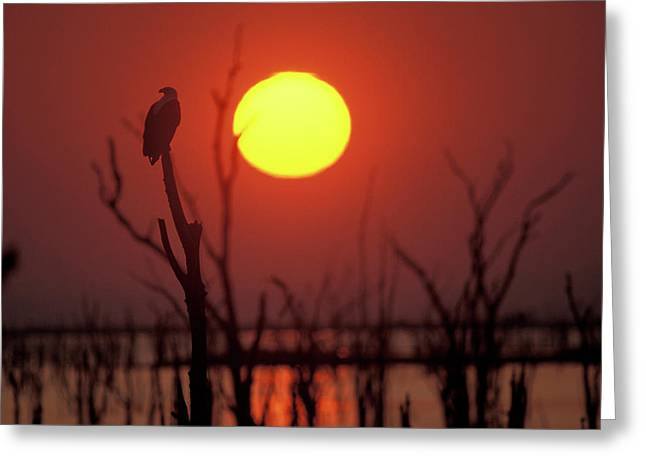 Sunset In Zimbabwe Greeting Card by Panoramic Images