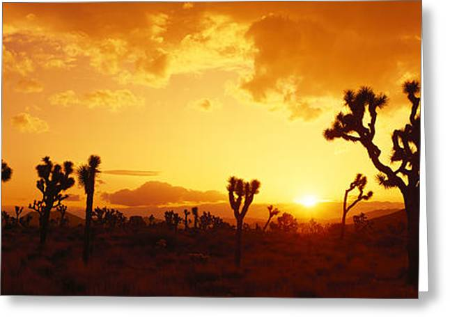 Colorful Photography Greeting Cards - Sunset, Joshua Tree Park, California Greeting Card by Panoramic Images