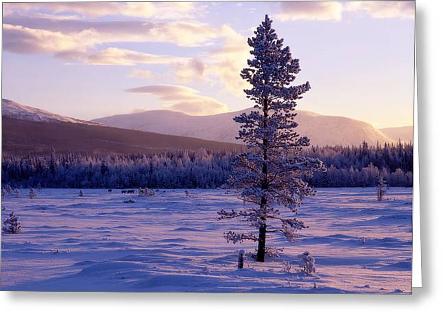 Snowy Evening Greeting Cards - Sunset Landscape In Winter Greeting Card by IB Photo