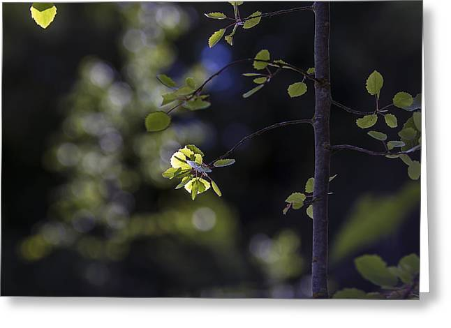 Blured Greeting Cards - Sunset light in the leaves Greeting Card by Algirdas Gelazius