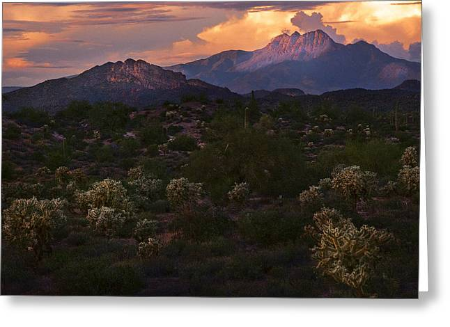 Dusky Greeting Cards - Sunset lit Cactus over Four Peaks Greeting Card by Dave Dilli