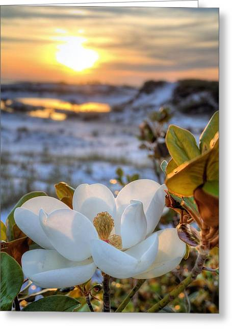 Emerald Coast Greeting Cards - Sunset Magnolia Greeting Card by JC Findley