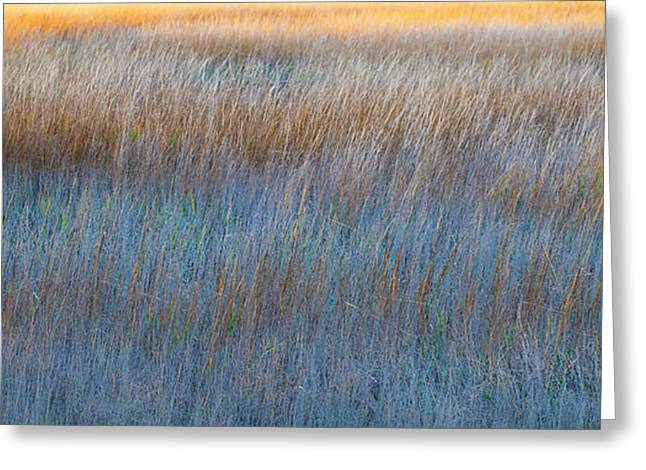 Sunset Marsh In Blue And Gold Greeting Card by Jo Ann Tomaselli