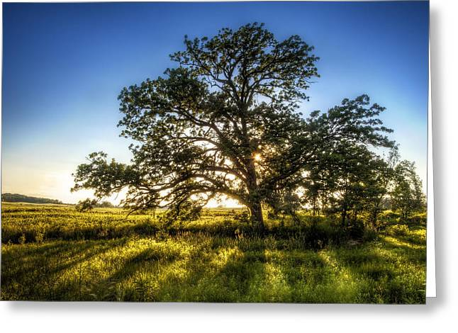 Oak Creek Greeting Cards - Sunset Oak Greeting Card by Scott Norris