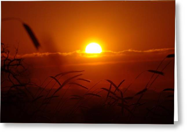 Plant The Seed Greeting Cards - Sunset On A Goldendale Wheat Feild  Greeting Card by Jeff  Swan