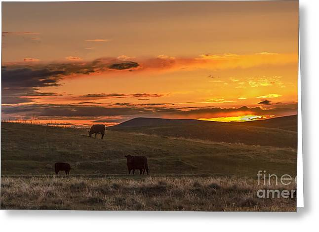 Haybale Greeting Cards - Sunset On Open Range Greeting Card by Robert Bales