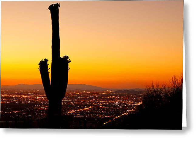 City Lights Greeting Cards - Sunset on Phoenix With Saguaro Cactus Greeting Card by Susan  Schmitz