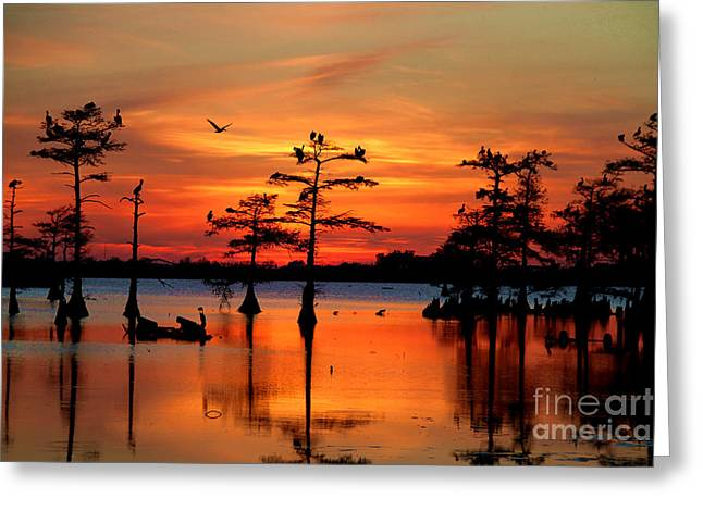 Sunset On The Bayou Greeting Card by Carey Chen