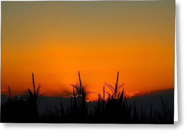 Cornfield Greeting Cards - Sunset On The Farm Greeting Card by Dan Sproul