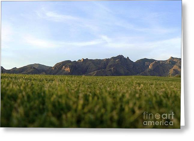 Catalina Mountains Greeting Cards - Sunset on the Golf Course Greeting Card by Rincon Road Photography