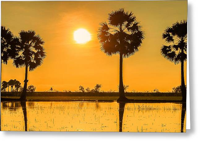 Reflection Harvest Pyrography Greeting Cards - sunset or sunrise with silhouettes of palm trees called Borassus flabellifer Vietnam Greeting Card by Son Tong Tran