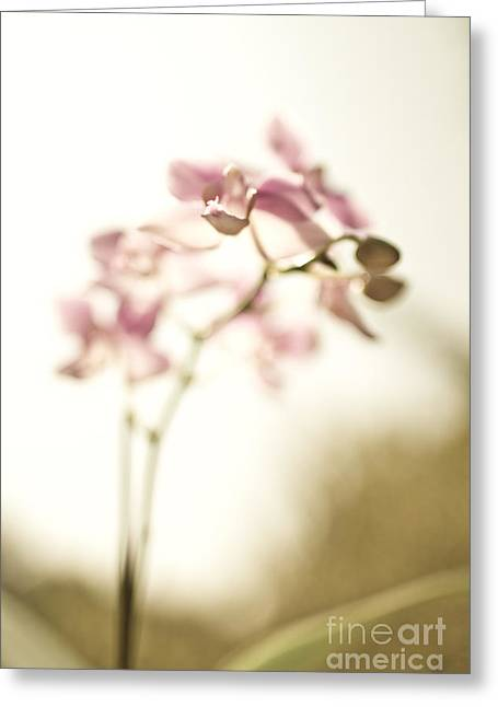 Amy Artwork Greeting Cards - Sunset Orchids Greeting Card by Amy Bish