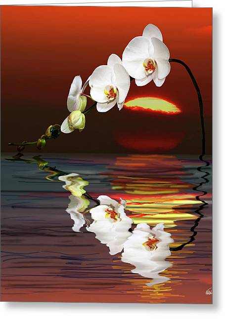 Ocean Images Greeting Cards - Sunset Orchids Greeting Card by Angela A Stanton