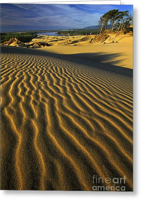 Oregon Dunes National Recreation Area Greeting Cards - Sunset Oregon Dunes National Recreation Area Oregon Greeting Card by Dave Welling