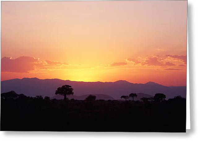 Savanna Greeting Cards - Sunset Over A Landscape, Tarangire Greeting Card by Panoramic Images