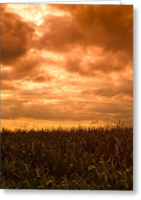 Cornfield Greeting Cards - Sunset Corn field Greeting Card by Wim Lanclus