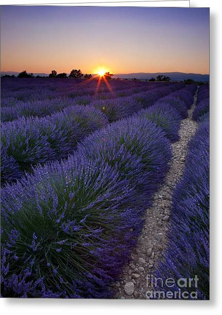 Sunset Over Lavender Greeting Card by Brian Jannsen