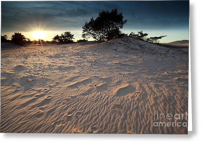 Gelderland Greeting Cards - Sunset Over Sand Dune Greeting Card by Olha Rohulya