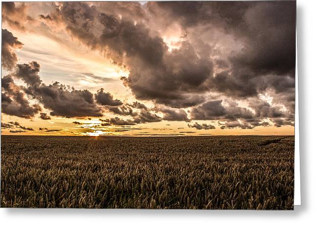 Wheat Field Sunset Print Greeting Cards - Sunset over the meadow Greeting Card by Paul Madden