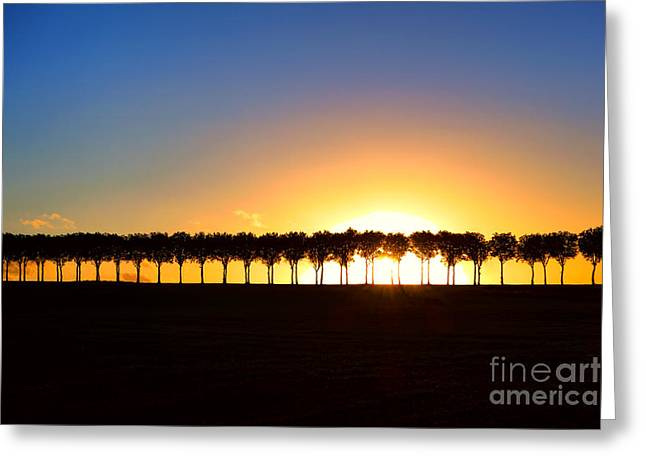 France Photographs Greeting Cards - Sunset over Tree Lined Road Greeting Card by Olivier Le Queinec