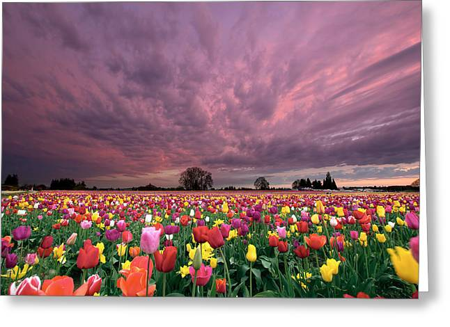 Field. Cloud Greeting Cards - Sunset Over Tulip Field Greeting Card by JPLDesigns