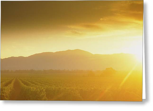 Sunset Over Vineyard, Napa Valley Greeting Card by Panoramic Images