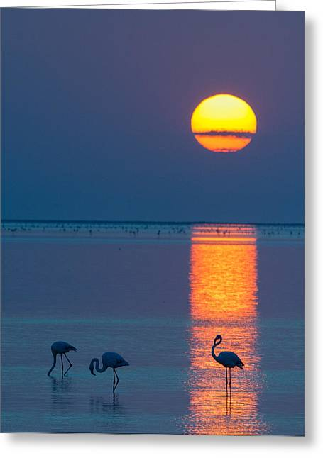 Flamingo Greeting Cards - Sunset Over Walvis Bay Greeting Card by Duane Miller