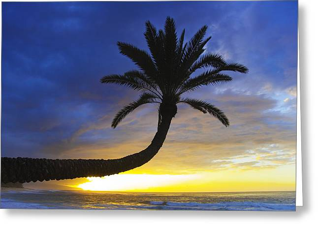Sunset Palm Greeting Card by Sean Davey
