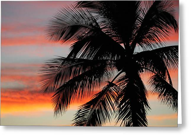 Islamorada Greeting Cards - Sunset Palm Greeting Card by Ty Helbach