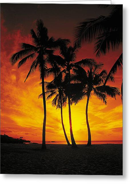 Sunset Prints Greeting Cards - Sunset Palms Greeting Card by Richard Cheski