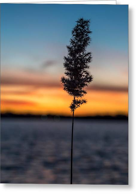 Sunset Greeting Cards Greeting Cards - Sunset Reed Windward Beach Park Greeting Card by Terry DeLuco