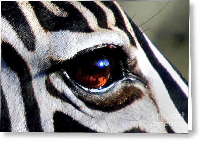 Addo Greeting Cards - Sunset Reflected in Zebras Eye    Greeting Card by Alexandra Jordankova