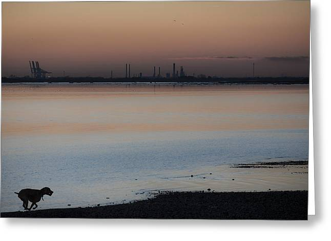 Dog Play Sea Greeting Cards - Sunset Runner Greeting Card by Graham Taylor
