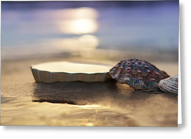 Whimsy Photographs Greeting Cards - Sunset Shells Greeting Card by Laura  Fasulo