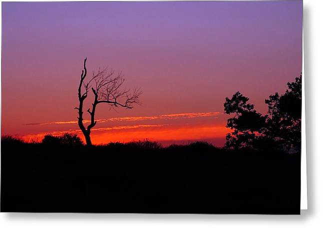 Openness Greeting Cards - Sunset Silhouette 2 Greeting Card by Francie Davis