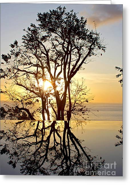 Tree Leaf On Water Greeting Cards - Sunset Silhouette and Reflections Greeting Card by Kaye Menner