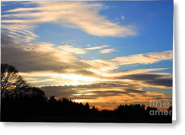 Sillouette Greeting Cards - Sunset Sky Greeting Card by Nick Gustafson