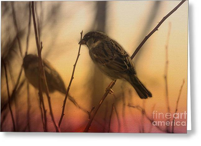 Full-length Portrait Greeting Cards - Sunset Sparrows Greeting Card by Janice Rae Pariza