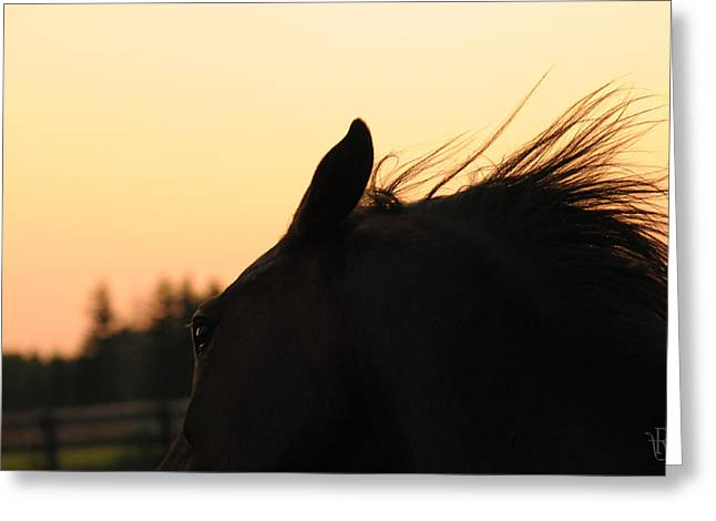 Crazy Horse Photographs Greeting Cards - Sunset Spirit Greeting Card by Renee Forth-Fukumoto