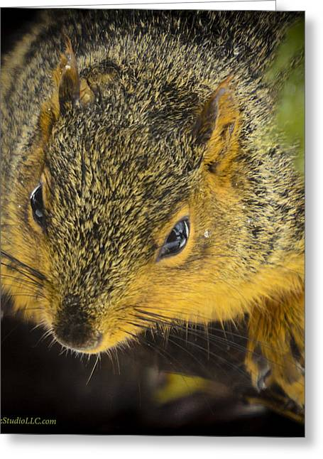 Wild Orchards Greeting Cards - Sunset Squirrel Greeting Card by LeeAnn McLaneGoetz McLaneGoetzStudioLLCcom