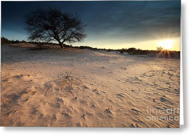 Gelderland Greeting Cards - Sunset Sunshine Over Sand Dunes And Tree Greeting Card by Olha Rohulya