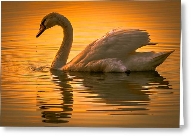 Sunset Swan Greeting Card by Brian Stevens