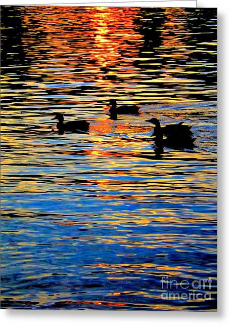 Amazing Sunset Greeting Cards - Sunset Swim Greeting Card by Robyn King