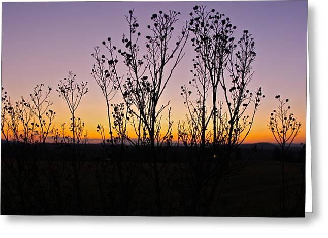 Jennifer Lamanca Kaufman Greeting Cards - Sunset through the trees Greeting Card by Jennifer Lamanca Kaufman