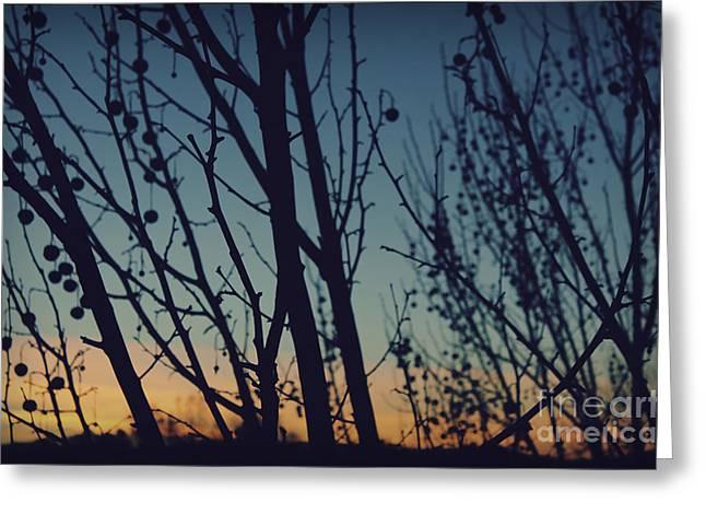 Sunset Through The Trees Greeting Card by Jennifer Ramirez