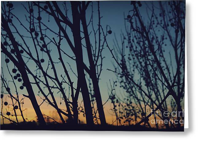 Sunset.sky Greeting Cards - Sunset Through The Trees Greeting Card by Jennifer Ramirez