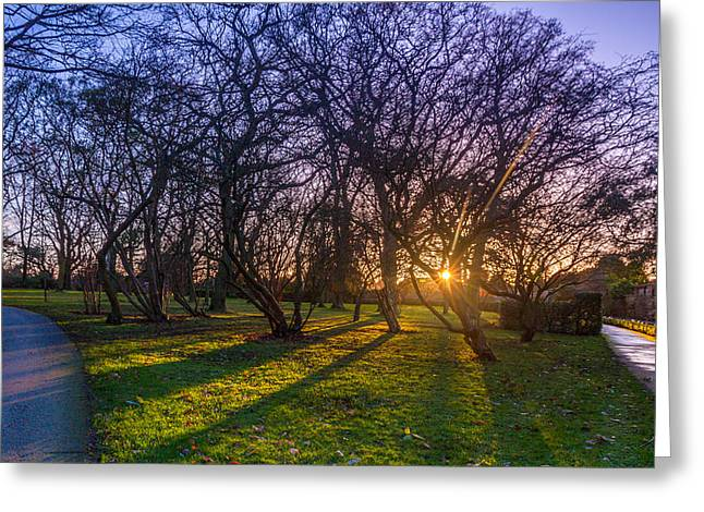 Sunset Prints Of Ireland Greeting Cards - Sunset through the trees  Greeting Card by John Hurley