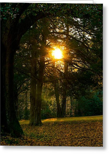 University Of Alabama Greeting Cards - Sunset Through the Trees Greeting Card by Shelby  Young